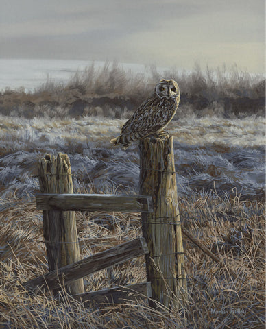 """Frosty Meadow"" Short-eared Owl Prints"