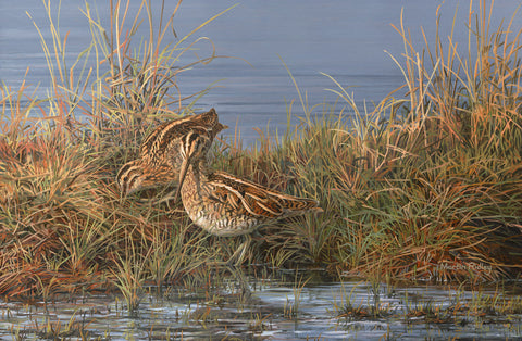 """Snipe Pair"" Common Snipe Print"
