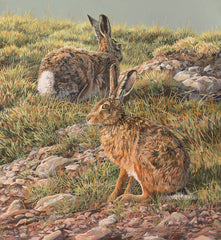 """Spring  Brown Hares"" Brown Hares Print"