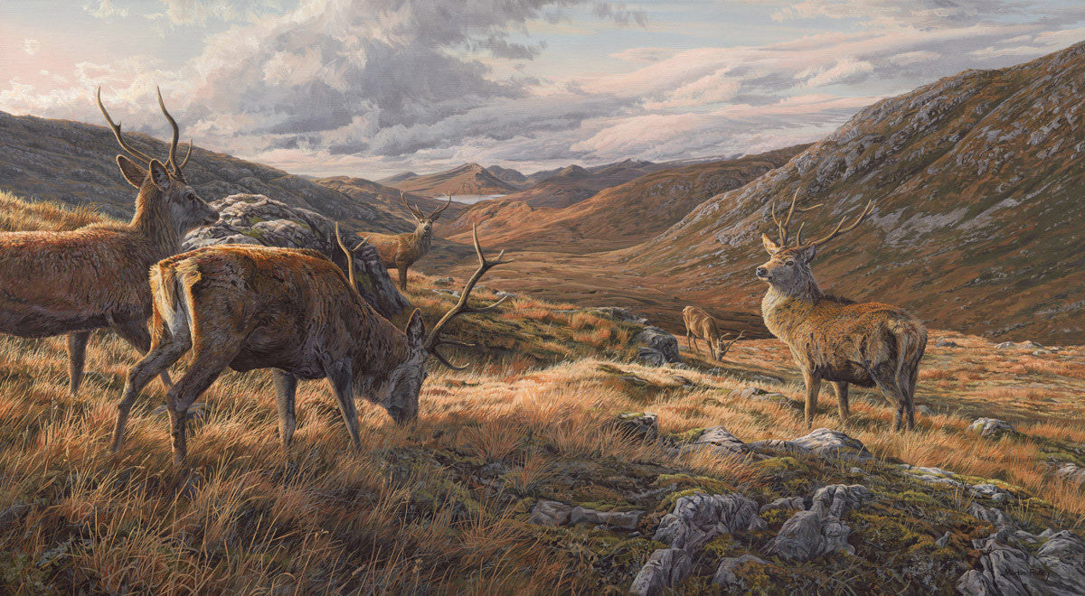 Red Deer Picture by Martin Ridley