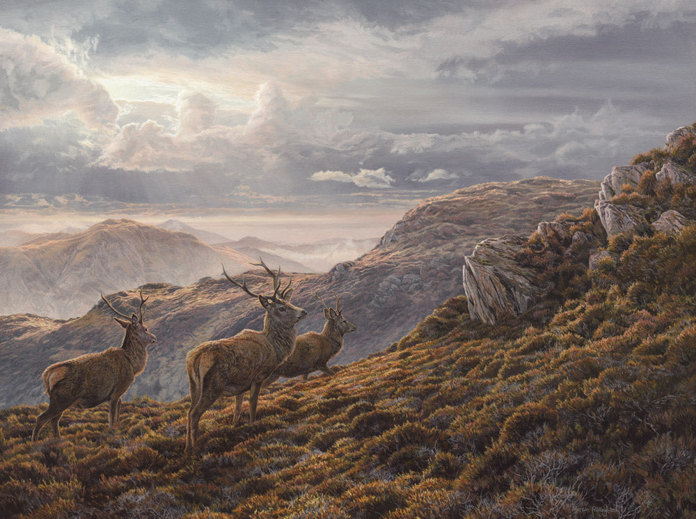 Red Deer Stags on Ben Halton