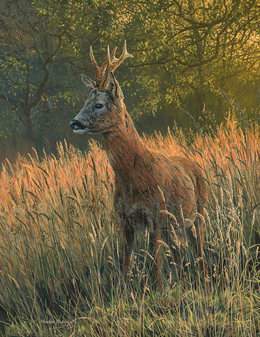 """Summer Grasses"" Roe Buck Print"