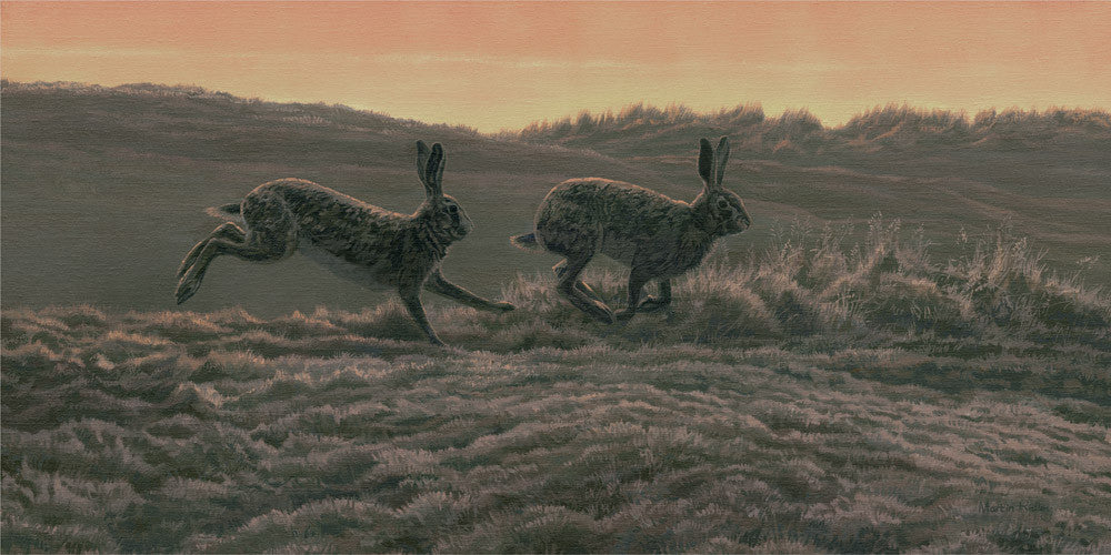 European brown hares running picture