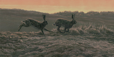 European Brown Hares Print