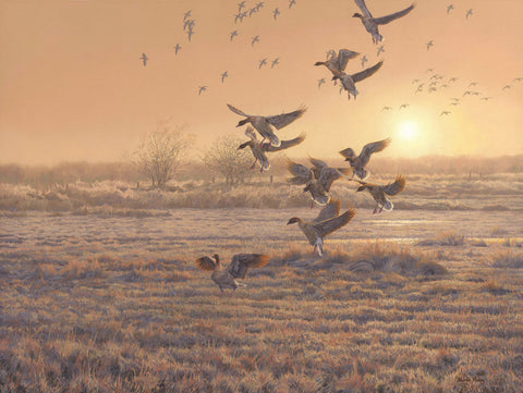 """First In"" Pink-footed Geese Prints"