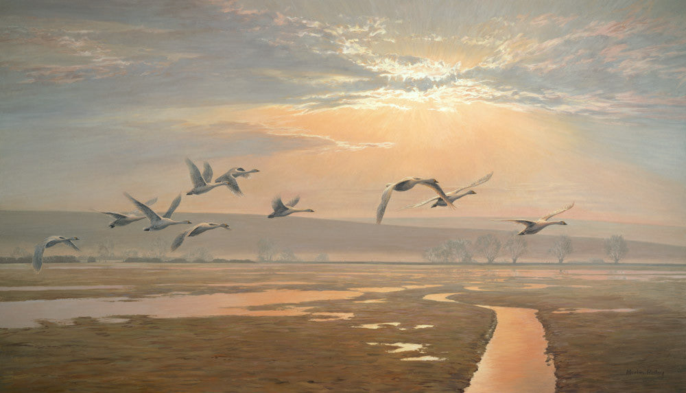 """Flight of Swans"" by Martin Ridley -  Picture of Bewick's Swans in Flight reproduced as a print"