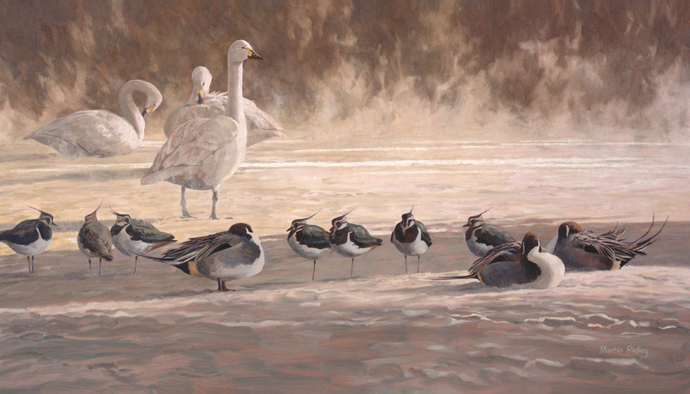 Picture of swans lapwing and pintail duck print