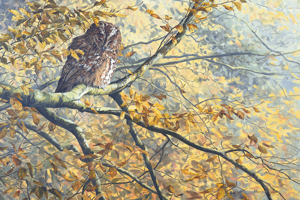 Print of Tawny Owl Roosting Amongst Autumn Leaves