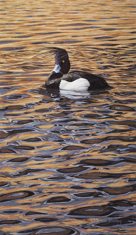"""Tuft Trouble"" Tufted Duck Print"