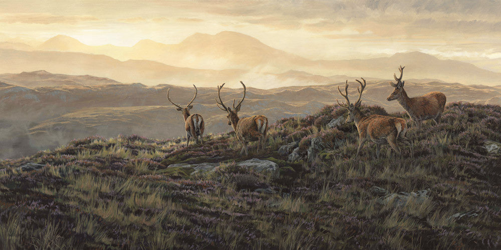 Red deer stags print for sale. Velvet Morning by wildlife artist Martin Ridley
