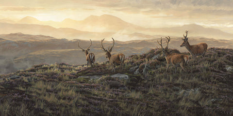 """Velvet Morning"", Red Deer Stags"