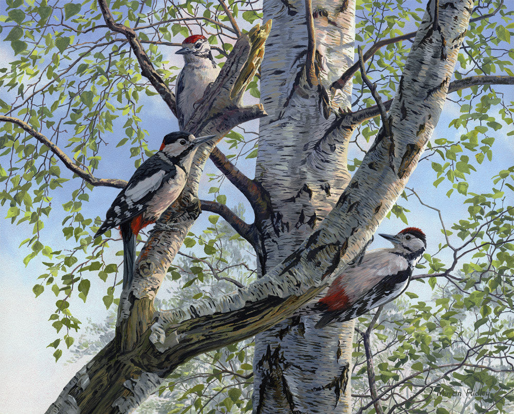 great spotted woodpeckers print