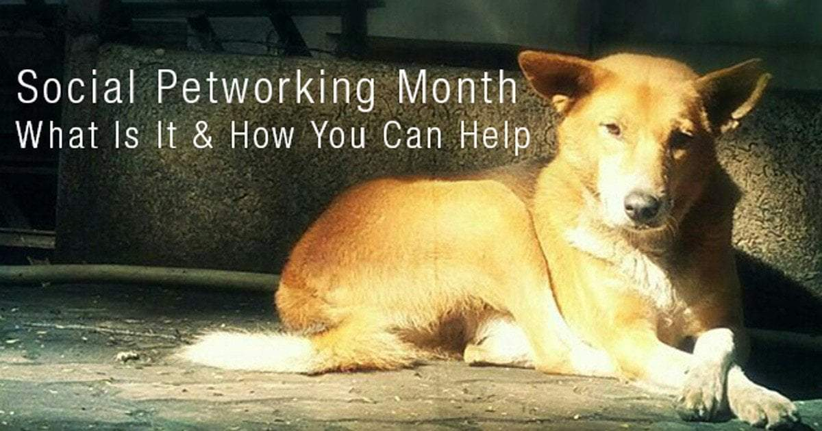 Social Petworking Month:  What Is It and How You Can Help