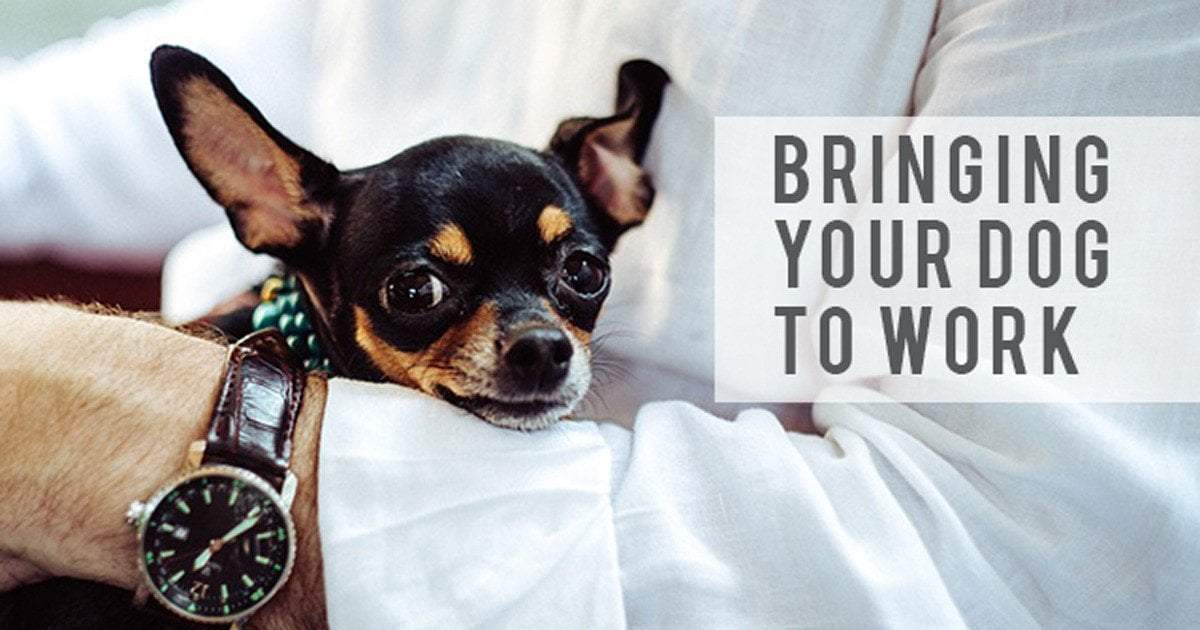 What you need to know before bringing Your Dog To Work
