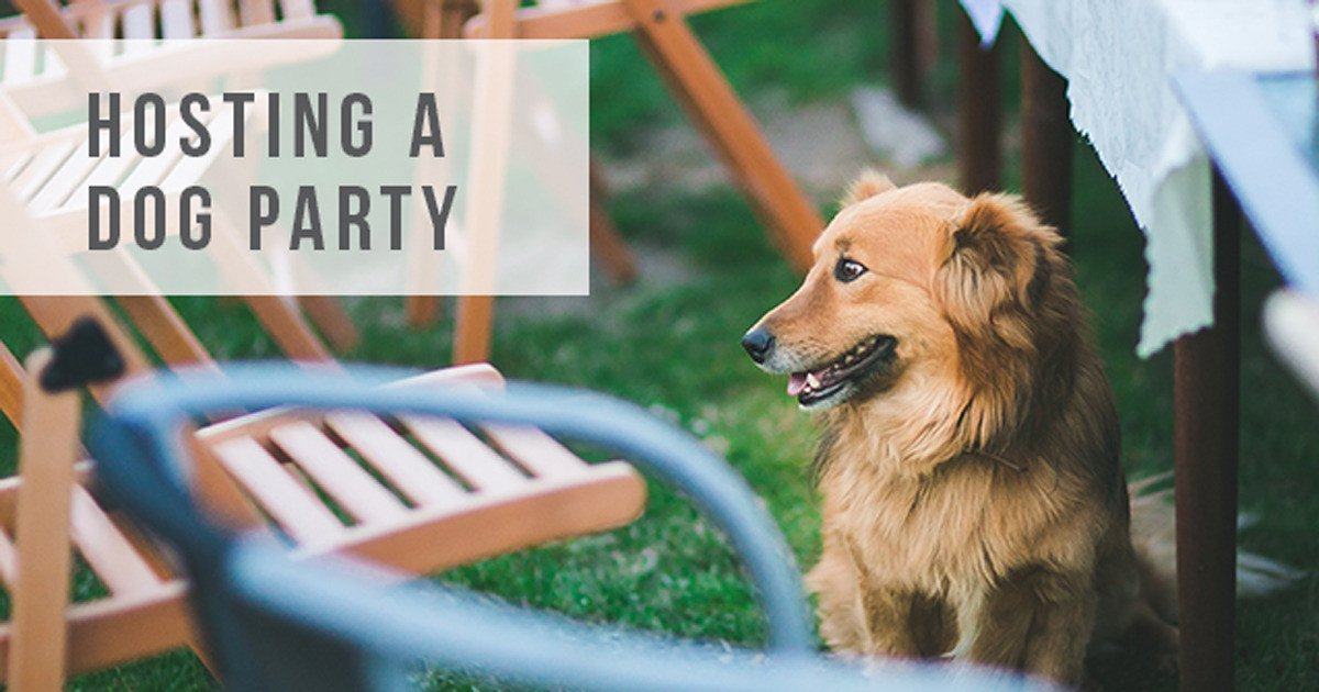 It's party time for Fido! Hosting a Dog Party