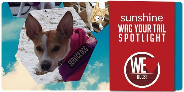 Wag Your Tail Spotlight - Featuring Sunshine