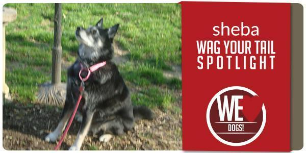 Wag Your Tail Spotlight - Featuring Sheba