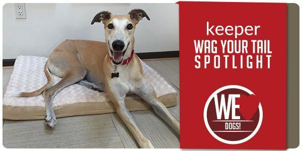Wag Your Tail Spotlight - Featuring Keeper