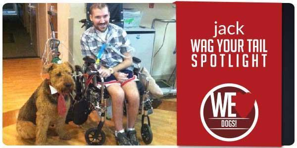 Wag Your Tail Spotlight - Featuring Jack
