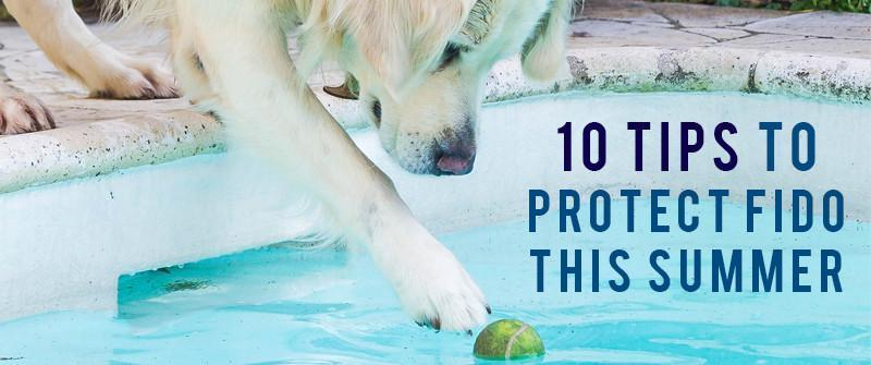 10 Summer Tips to Protect Fido this Summer