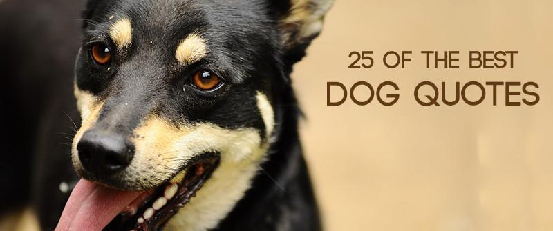 25 of the Best Dog Quotes