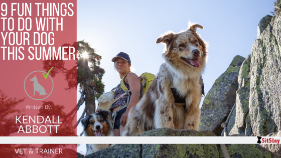 9 Fun Things to do with Your Dog This Summer