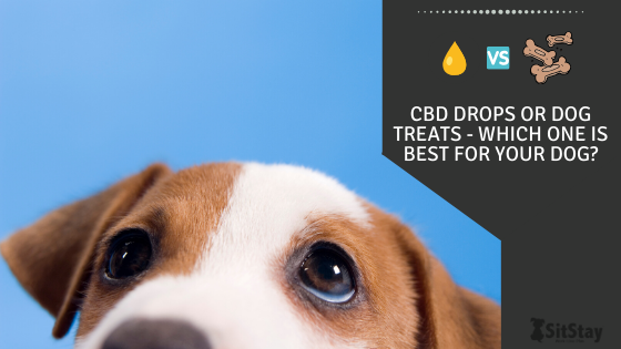 CBD Drops or dog treats - which one is best for your dog