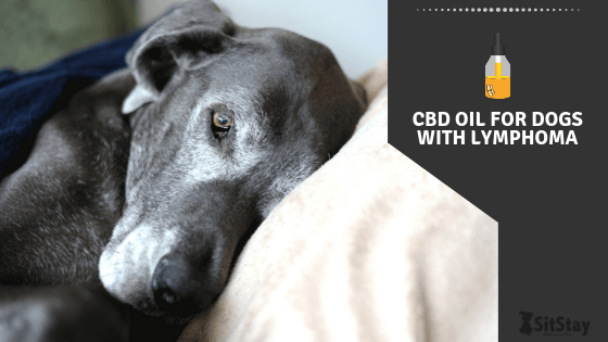 CBD Oil for Dogs with Lymphoma