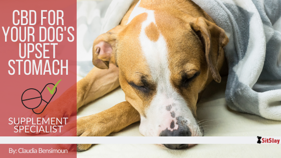 CBD for Your Dog's Upset Stomach