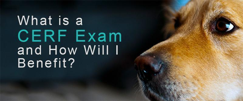 What is a CERF Exam and Why You Will Benefit from it!