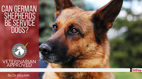 Can German Shepherds Be Service Dogs?