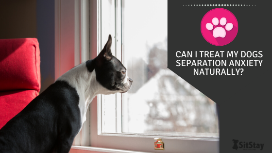 Can I Treat My Dog's Separation Anxiety Naturally?
