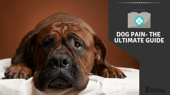 Dog Pain - The Ultimate Guide