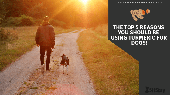 The Top 5 Reasons You Should Be Using Turmeric For Dogs!