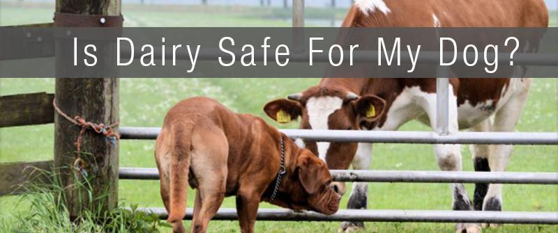 Is Dairy Safe for My Dog?