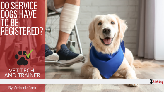 Do Service Dogs Have To Be Registered?