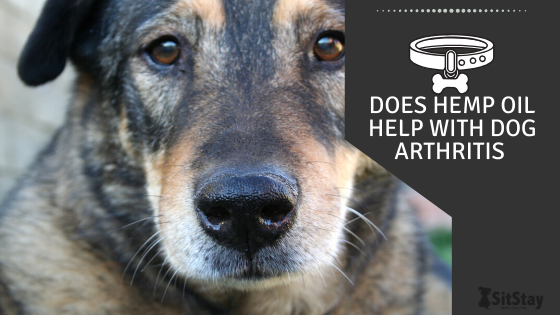 Does Hemp Oil Help Dog Arthritis?