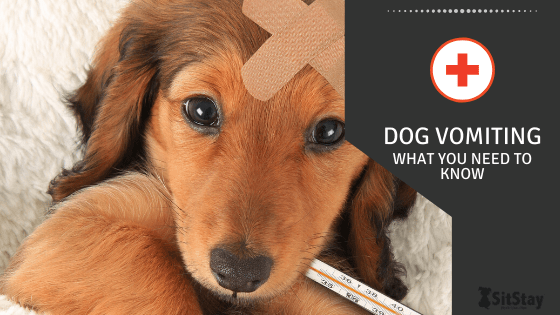 Dog Vomiting: What You Need To Know