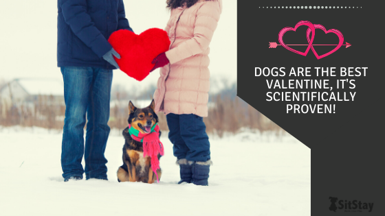 Dogs are the BEST Valentine, It's Scientifically Proven!