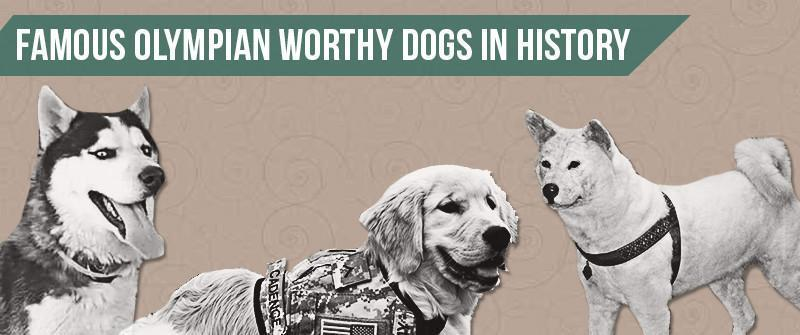 Famous Olympian Worthy Dogs in History
