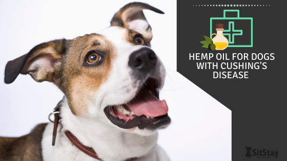 Hemp Oil for Dogs with Cushing's Disease
