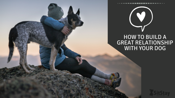 How To Build A Great Relationship With Your Dog