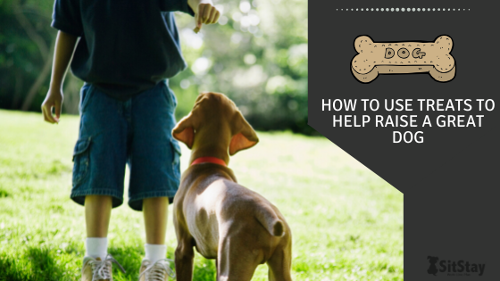 How To Use Treats To Help Raise A Great Dog