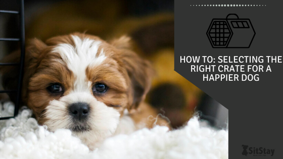 How To: Selecting the Right Crate For A Happier Dog