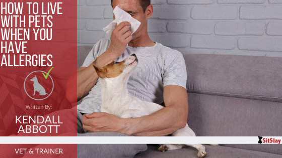 How to Live with Pets When You Have Allergies