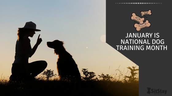 Get Ready! January is National Train Your Dog Month