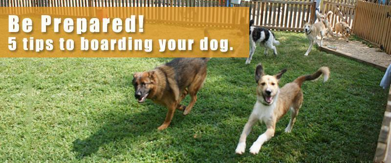 Be prepared!  5 Important Tips for boarding your dog!