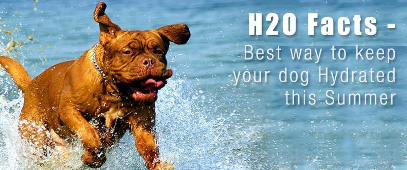 H20 Facts - Best way to keep dog Hydrated this summer