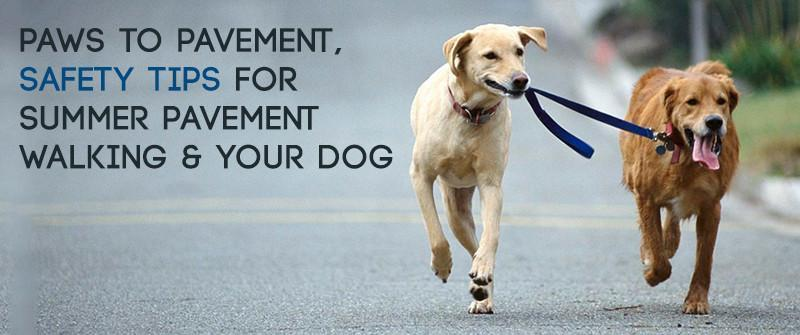 Paws to Pavement, Safety tips for Summer Pavement Walking and your Dog