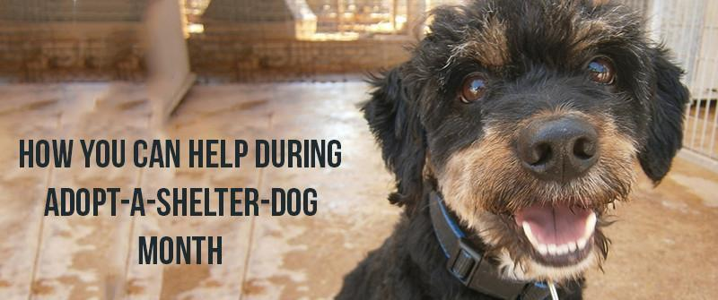 How you can help during Adopt-A-Shelter-Dog Month